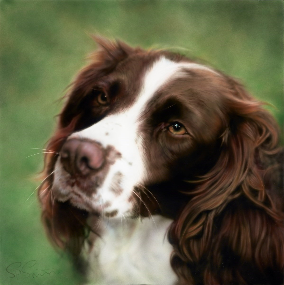 Colour Springer by Steven Smith -  sized 24x24 inches. Available from Whitewall Galleries